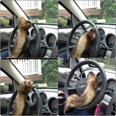 Come on, I'm driving.