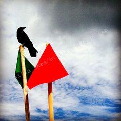 5x5 fine art photography print (minimalist art, cloudy day, bird silhouette)