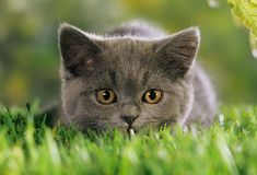 Google Image Result for http://img.webmd.com/dtmcms/live/webmd/consumer_assets/site_images/articles/health_tools/taking_care_of_kitten_slideshow/photolibrary_rm_photo_of_kitten_in_grass.jpg