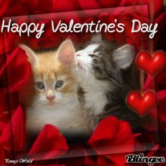 valentine ecards cats