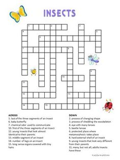 Insects Crossword for Kids