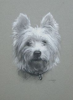 Westie dog portrait drawing in charcoal and white chalk on gray toned fine art paper.  Fine Art Commissioned pet portraits.