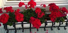 """Duncan og Dexter har fått sin egen blomsterkasse over hytta på terrassen - The bunnies D&D have got their own flowers by their cottage on the terrace :) """"Margeritten""""by IJ 24.7.14"""