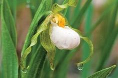 Orchids: A View of Our Tropical Missouri -- Areas of rugged terrain, calcareous soils and secret fens provide habitat for rare species. | Missouri Conservationist