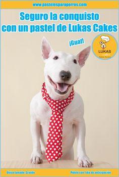 Seguro la conquisto con un pastel de LukasCakes ¡guaf!  #perros #pastelesparaperrosdf #Df #Coyoacán #pastel #perro #LukasCakes