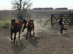 Enlazando..! Magic, Horses, Animals, Animaux, Horse, Animal, Animales, Animais