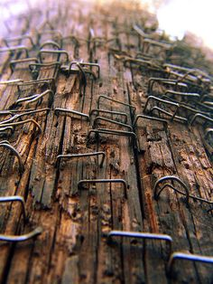staples on a telephone pole.  I need to make my own version of this image.  It could be a series--bulletin boards; other sign-posting places.