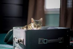 Relocating can be confusing and a hassle for you and your pets. No worries, these pet relocation companies are here to help - they manage the entire process for you! Cat Lover Gifts, Cat Gifts, Cat Lovers, Pet Travel Carrier, Cat Carrier, Pet Relocation, Relocation Companies, Pet Shipping, Cat Sitter