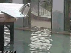 Clumsy Penguin's Clumsy Dive