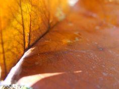 Antelope Canyon, Leaves, Photography, Photograph, Fotografie, Photoshoot, Fotografia