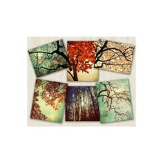 home decor, nature prints, autumn color, F ❤ liked on Polyvore