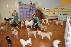 -Repinned- Doggie Daycare at The Barkers Pet Center.