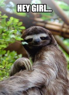 Sloths may not be quick, but they sure can be suave. #heygirl