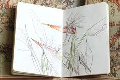 My sketches in 2013 (part three) by Natalie Ratkovski, via Behance