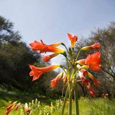 Ven a visitar Los Altos de Olmué. Los mejores terrenos para construir la casa de tus sueños. www.losaltosdeolmue.cl