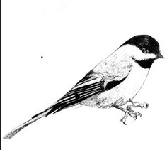 Drawing ideas - bird