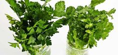 Have you ever had trouble keeping fresh herbs fresh? This super easy trick keeps fresh herbs useable for a couple of weeks. Como Plantar Cilantro, Como Plantar Salsa, Fresco, Paleo For Beginners, Mother Teach, Herb Recipes, Simply Recipes, Day Plan, Convenience Food