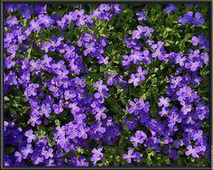 fleurs Violet, Purple Flowers, Herbs, Instagram Posts, Blog, Nature, Nantes, Flowers, Brittany