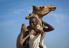 Somali nomad carrying camel new born  - Somaliland by Eric Lafforgue, via Flickr