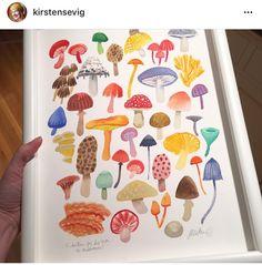 Kirsten Sevig fungi