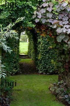 flowersgardenlove:  Secret Garden / repi Beautiful gorgeous pretty flowers