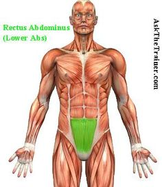 Best Lower Ab Workout - Read, watch Exercise Videos to Lose Tummy Fat : AskTheTrainer.com