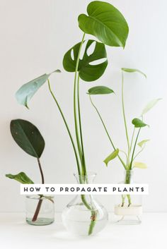 How to propagate plants. Click through for 3 easy steps to plant propagation. monstera Quick Guide to Propagating Plants in 3 Easy Steps - Paper and Stitch Potted Plants, Garden Plants, Outdoor Plants, Hanging Plants, Water Plants Indoor, Easy House Plants, Hydroponic Plants, Low Maintenance Indoor Plants, Decoration Plante