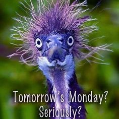 Community Post: 18 Cute Animals Having A Worse Hair Day Than You Animals And Pets, Funny Animals, Cute Animals, Crazy Animals, Funny Birds, Beautiful Birds, Animals Beautiful, Animal Pictures, Funny Pictures