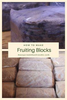 Fruiting blocks are the base of a mushroom business. Grow Your Own Mushrooms, Mushroom Grow Kit, Growing Mushrooms, Garden Mushrooms, Hobby Farms, Home Based Business, Fungi, Stuffed Mushrooms, Conditioner