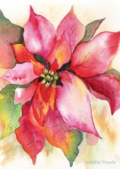 Christmas Poinsettia Watercolor by Marsha Woods