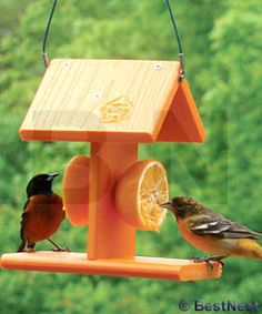 Woodlink Add color and a new feeding station to your bird sanctuary using the Woodlink Going Green Recycled Plastic Oriole Fruit Feeder. This convenient unit has a vivid orange body, to attract attent