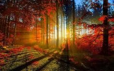 Image discovered by Vivi Rindom. Find images and videos about nature, sun and autumn on We Heart It - the app to get lost in what you love. Foto Nature, All Nature, Iphone 5 Wallpaper, Fall Wallpaper, Wallpaper Ideas, Nature Wallpaper, Autumn Forest, Forest Light, Autumn Fall