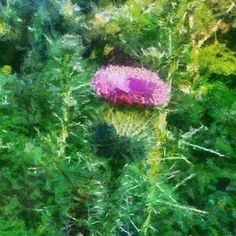 Evening Thistle Best Iphone, Iphone Photography, Your Image, Photographers, Contrast, Eye, Board, Plants, Photos
