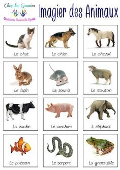 Basic French Words, How To Speak French, Learn French, French Language Lessons, French Language Learning, French Lessons, French Flashcards, French Worksheets, Vocabulary List