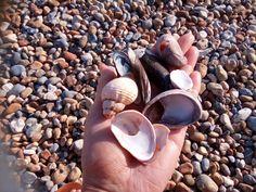 Who doesn't like collecting shells? 🌊💙🔎🖌🎨 I just have to draw these beauties!⠀⠀⠀⠀⠀⠀⠀⠀⠀ ⠀⠀⠀⠀⠀⠀⠀⠀⠀ #beachillustration #seasideinspro #shells #illustrationinspro #eastsussex #southofengland #summervibes #adayonthebeach #artistinspiration #designinspiration #freelancedesigner #freelanceartist #coastalengland #englishcoast #englistartist #englishdesigner #bexhillonsea #blueskies #seasidetown #textileinspro #fabricdesigner #patterndedigner #interiordesigninspro #homewaredesigner #decorshop…