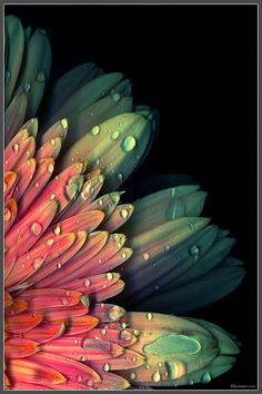 dew on petals, pretty