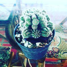 Cactus y suculentas #cactus  #lasmaticasdemirna  #regalavida .#cactus #carupano by lasmaticasdemirna