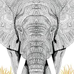 The Menagerie: Animal Portraits to Colour: Amazon.co.uk: Richard Merritt, Claire Scully: 9781910552155: Books