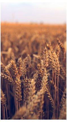 nature wallpaper iphone photography wallpaper