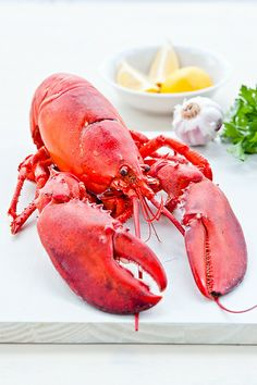 My last meal would be lobster with lots of lemon. Lobster Art, Live Lobster, Lobster Dinner, Crab And Lobster, How To Cook Lobster, Cooked Lobster, Good Healthy Recipes, Snack Recipes, Lobster Recipes