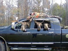 I got this info in an email that claims that it actually happened with some guys from Maine (I doubt it but its still funny).     Apparently they dressed the truck up with the guy dummy spread eagled on the roof of the truck. The driver and passengers all put on realistic looking Moose Heads and then down the Maine Toll Interstate they went causing about 16 accidents. In they end they ended up going to jail.
