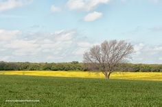 Was driving south down Texas 281 headed to the Texas Hill Country and spotted this field and tree. Sometimes you just have to take the shot. Photo from a 2015 road trip.