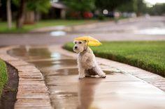 Getting caught in the rain.