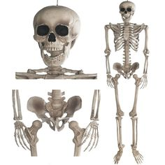 Skelett Halloween Deko Anatomie Modellskelett