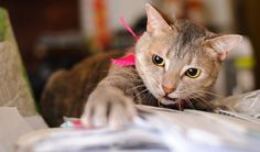 Be prepared before adopting your first cat with these tips
