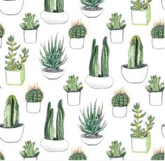 cactus crib sheet cacti nursery gender neutral nursery