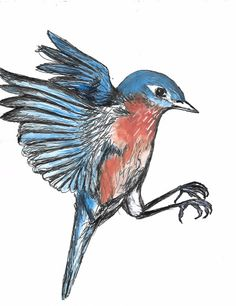 watercolor and ink drawing bluebird in flight on paper published in www.tinylitmag.weebly.com by a. myers