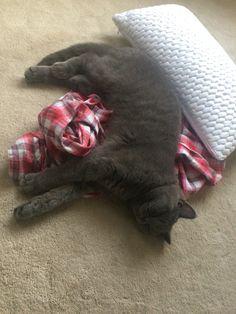 Cat asleep on pjs