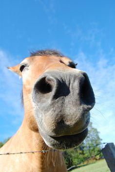 Hello Horse