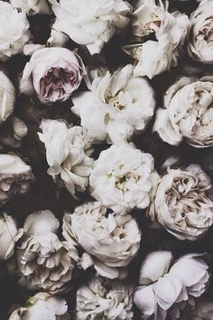 Resultado de imagem para goth flowers